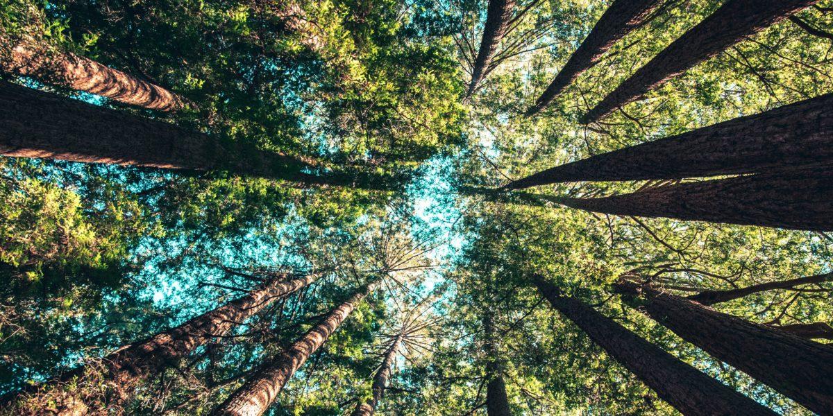 Ekologiczne długopisy – dlaczego warto się nimi zainteresować?